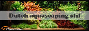 Dutch aquascaping
