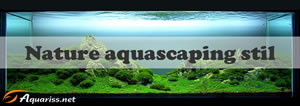 Nature aquascaping
