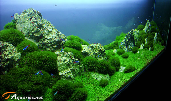 Pasquale Buonpane East and West aquascape